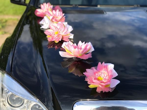 Розовые кувшинки